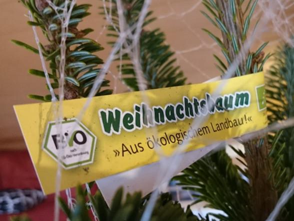 tannenbaum01